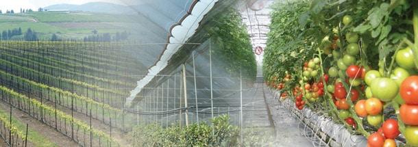 5. Paskal - Greenhouse